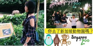 Read more about the article 你去过了新加坡国家动物园吗?这里是全世界唯一让人猿在大自然行走的动物园!