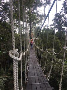 The Habitat Rope Bridge