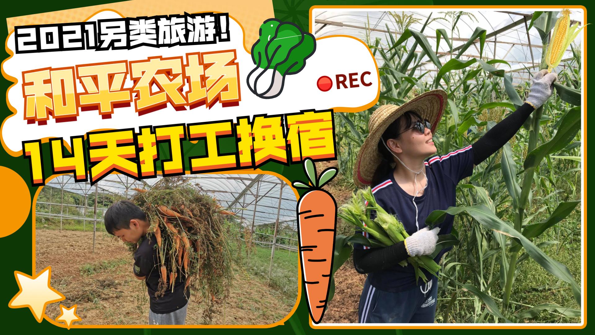 You are currently viewing 【金马仑和平农场 Terra Farm打工体验】3分钟内带你了解 14天打工换宿&收割蔬菜真实情况!