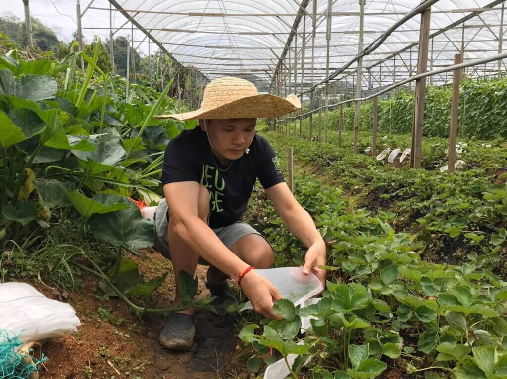 Terra Farm