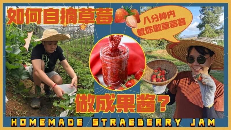 You are currently viewing strawberry jam recipe草莓酱的做法2021: 从和平农场内新鲜采摘后制作成最健康的自家草莓酱!